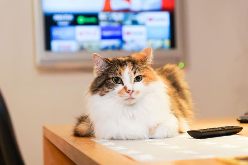 【使いこなし編】第40回:Amazon「Fire TV Stick」の便利なリモコンアプリ設定(Impress Watch) - Yahoo!ニュース